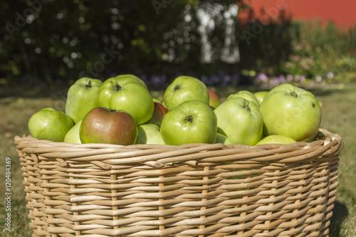 Poster Korg med nyskördade äpplen