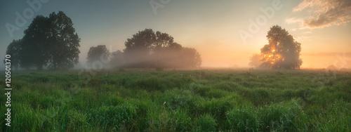 Misty spring landscape - 120501370