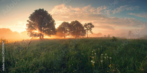 Fotobehang Zonsopgang Colorful spring sunrise on meadow