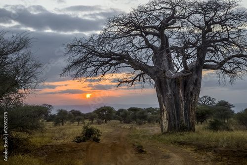 Foto op Canvas Baobab Baobab at Sunset, Tanzania