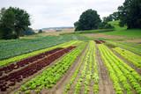 Salat on the field