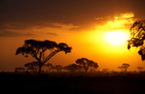 Typical african sunset with acacia trees in Masai Mara, Kenya. H
