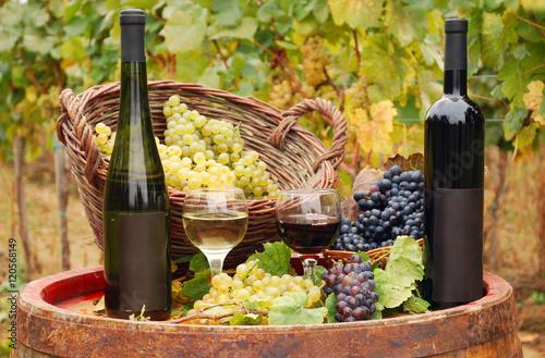 red and white wine in vineyard autumn season © goce risteski