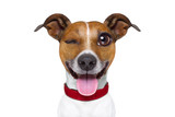 Emoticon or  Emoji dumb  silly dog - 120583788