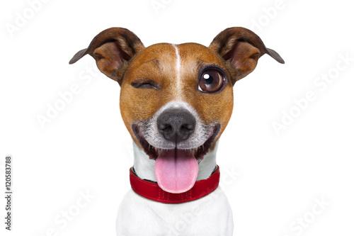 Emoticon or  Emoji dumb  silly dog Poster