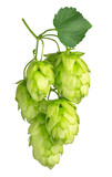 hops isolated on white background - 120584317