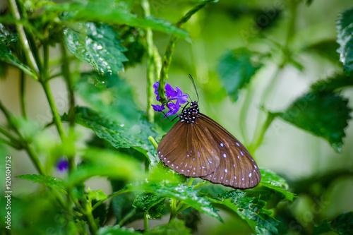 Papiers peints Nature Vlinder in de struiken