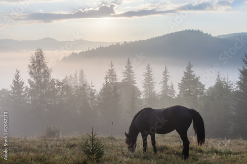 Mountain landscape with grazing horse Poster