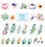 Foral pastel collection with flower,roses,leaves,branches,succulents,eucalyptus leaves,pansy flower and more.Colorful collection with 25 watercolor elements.Set of floral elements.Pastel 2 collection