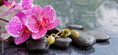 kamienie-bazaltowe-zen-i-orchidea