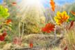 Herbst 160