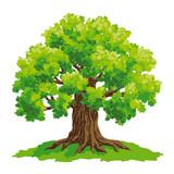 Oak tree - vector drawing