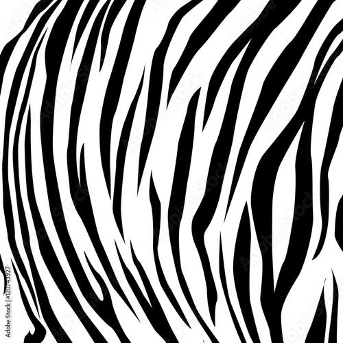 Animal skin black and white tiger. vector Eps 10