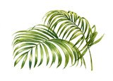 watercolor painting of coconut palm leaves isolated on white background - 120808331