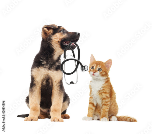 puppy vet and cat and stethoscope