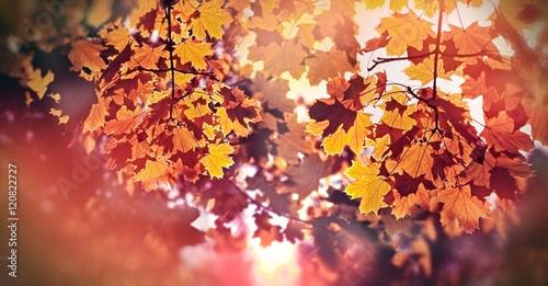 Keuken foto achterwand Bossen Treetop illuminated with autumn sun - beautiful autumnal leaves in late afternoon