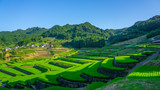 famous terraced rice-fields in Hasami, Nagasaki, Japan.