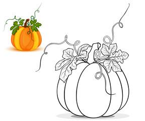 Pumpkin for coloring book vector