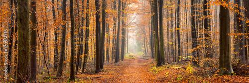 Wald Panorama im Herbst