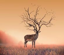 Begrepps Deer hjort, en torr träd som kronhjort stag