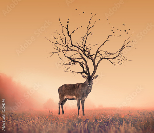 Foto op Canvas Bestsellers Conceptual Deer stag , a dry tree as red deer stag