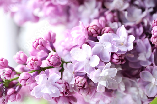 Blooming purple lilac flowers background, close up Plakat