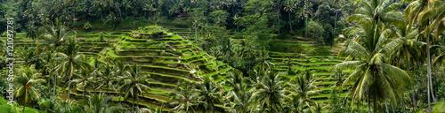 Aluminium Rijstvelden Rizières en terrasse de Tegalalang, Bali, Indonésie