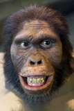 Mask representing and Australopithecus Africanus, a caveman who lived thousands of years ago on Earth.