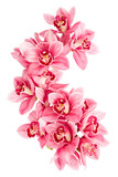 Fototapety Orchid flowers isolated on white background