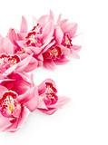Fototapety Beautiful orchid flowers