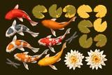 Set of koi fish and lotus - 121055110