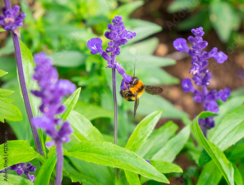 Deurstickers Vlinder wasp Insect pollinating perched on tree top purple flower