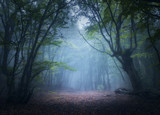 Forest in fog. Enchanted autumn forest in fog in the morning. Old Tree. Beautiful landscape with trees, colorful green leaves and blue fog. Nature background. Dark foggy forest with magic atmosphere