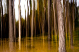 Sognando il bosco alla ricerca degli gnomi