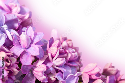 Delicate floral background with flowers of lilac.