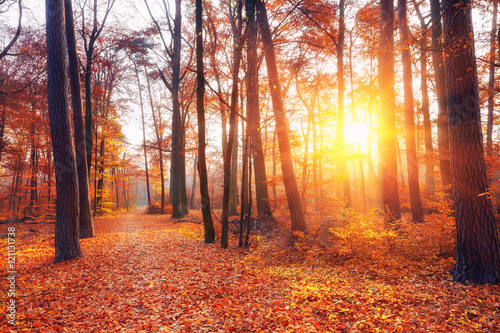 Vibrant sunset in the autumn forest Poster