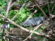 Jungle Cat In The Dark