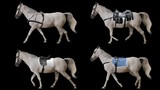 White horse is harnessed and saddled walking. Variations Saddle: sports, racing, cowboy. Animation isolated and looped.