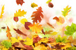 Herbst 49
