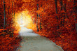 Magical Autumn forest with path and fantastic glow