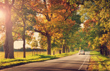 Fototapety old asphalt road with beautiful trees on the sides in autumn