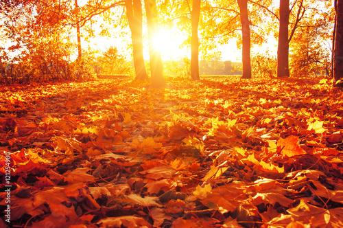 Foto op Canvas Rood fallen leaves in autumn