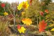 Herbst 155