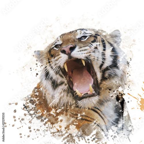 akwarela-portret-tygrysa