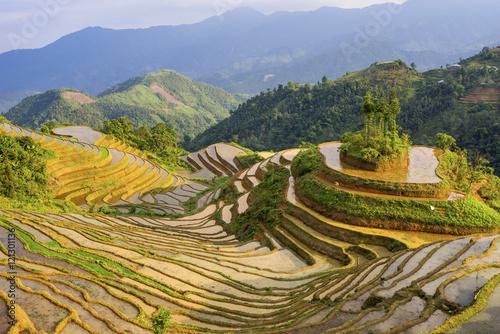 Fotobehang Rijstvelden Beautiful terraced rice field in Hoang Su Phi in Vietnam