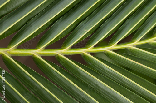 Natural coconut leaves Poster