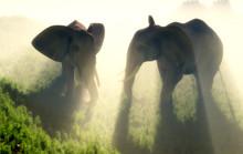 Die Herde von Elefanten
