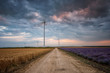 Country road in summer / A beautiful sunset view with fields of lavender and wheat and a road between them