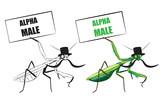 Praying mantis. Funny vector illustration. T-shirt design.