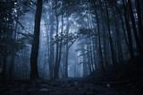 Spooky misty rainy f...